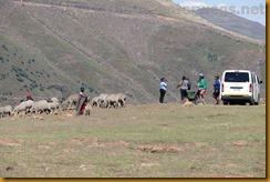Lesotho0481
