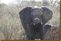 Südafrika0565