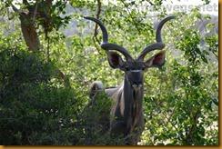 Südafrika0593