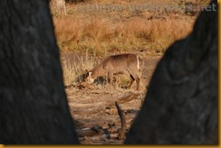 Südafrika0893