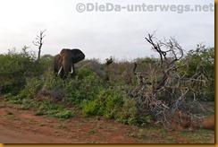 Südafrika1627