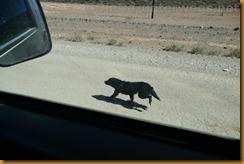Namibia2419