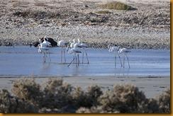 Namibia2962