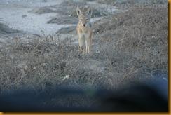 Namibia2969