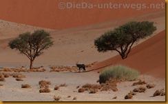 Namibia3269