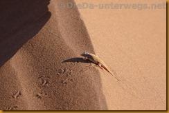 Namibia3542