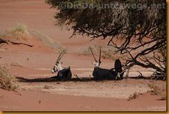 Namibia3595