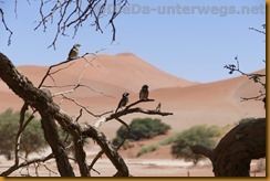 Namibia3612