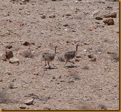 Namibia4515