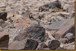 Namibia4521