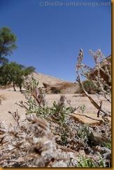 Namibia4546