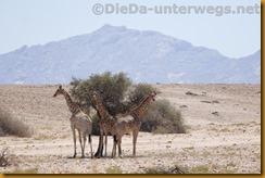 Namibia4595