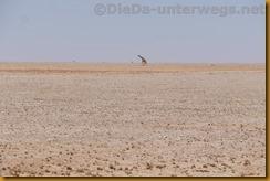Namibia4598