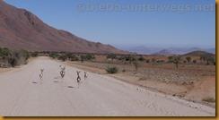 Namibia3108