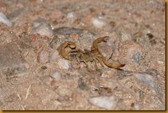 Namibia4632