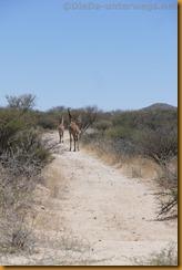 Namibia4948