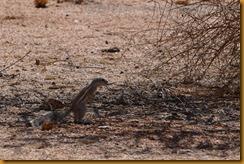 Namibia4994