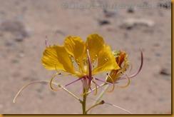 Namibia5419