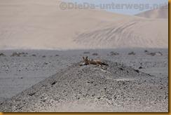 Namibia5516