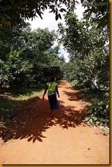 Simbabwe3637
