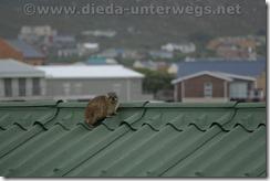 Südafrika13302