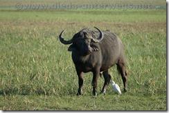 Namibia6672