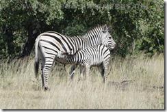 Namibia6764