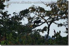 Malawi1106