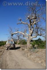 Malawi323