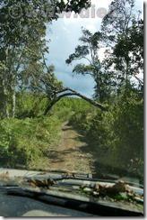 Malawi495