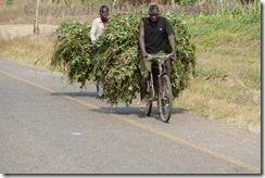 Malawi618