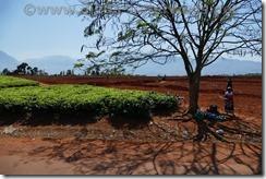 Malawi901