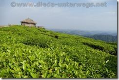 Rwanda119