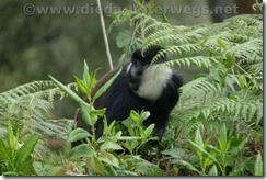 Rwanda151