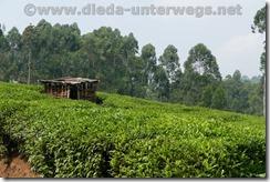 Rwanda242