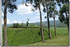 Rwanda370