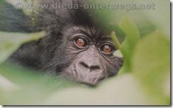 Rwanda601