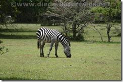 Kenia022