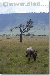 Kenia090