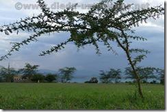 Kenia1576