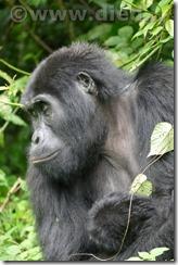 Uganda1220