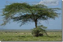 Kenia2003