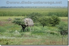 Äthiopien461